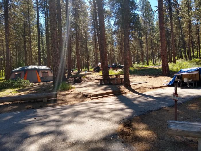A campsite in the woods with a paved driveway.Site 6 at Greyback Gulch.  (Camping equipment not included.)