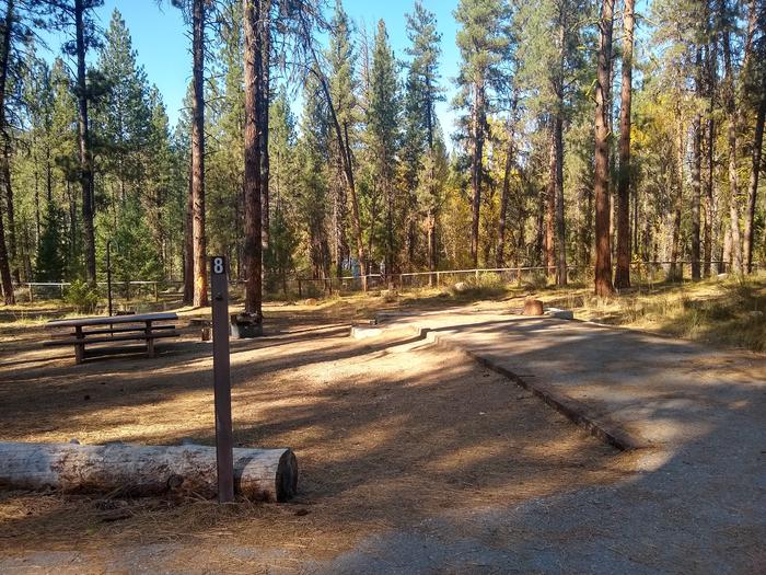 A campsite in the woods with a paved parking spot.Site 8 at Grayback Gulch.
