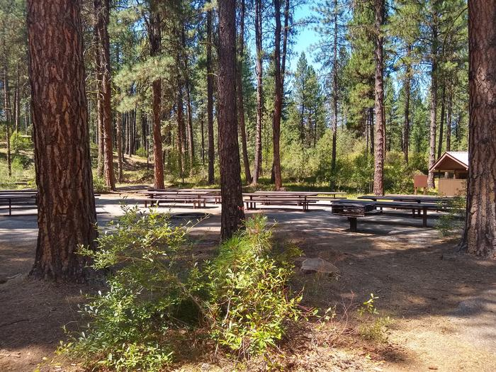 A large forested area with picnic tables and a restroom in the bathroom.Grayback Group A picnic area.