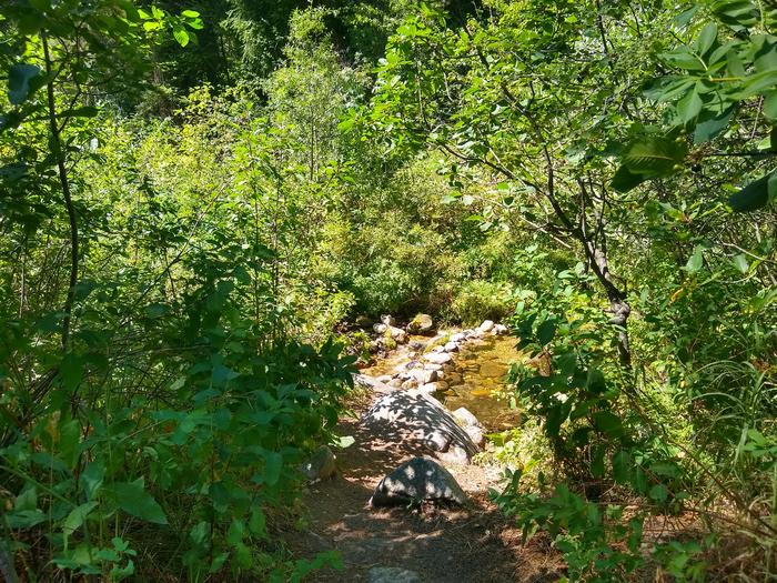 A small stream surrounded by green shrubbery.Site 2 at Bad Bear is close to a creek.