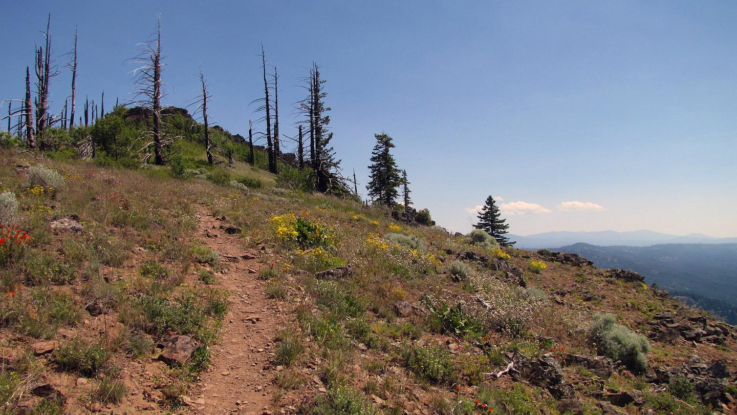 View near the top on the Grizzly Peak Trail