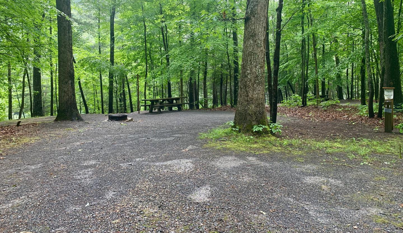 Campsite #11 Reservable