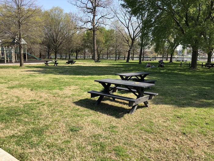The photo shows picnic benches on a grassy area with scattered trees.Hains Point Picnic Area D