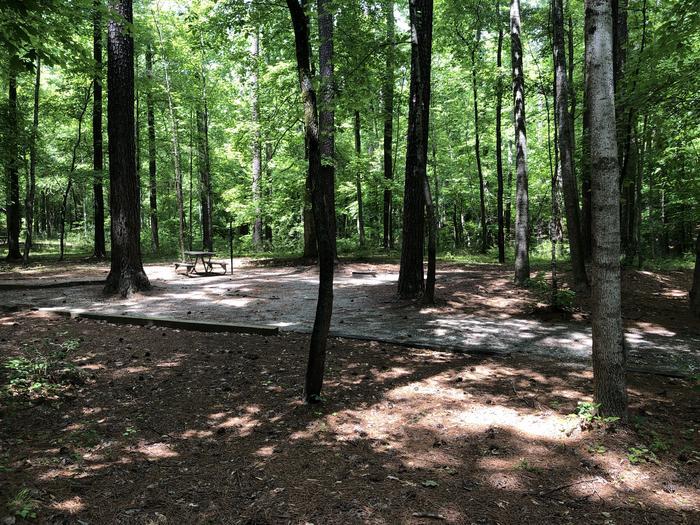 Large back in primitive site