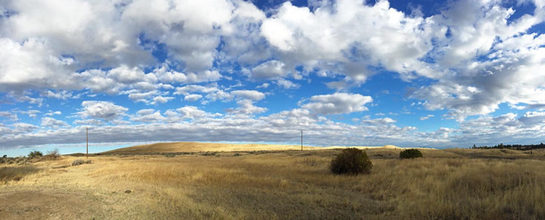 View of grassy landscape at Folsom Farm.