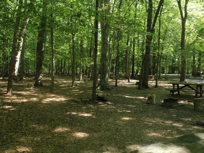 Campsite DSpring photo of Turkey Run Group Campground site D