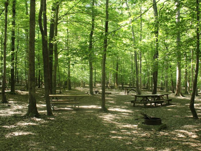 Campsite ESpring photo of Turkey Run Group Campground site E