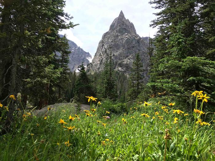 SpringtimeRecreation Area Trail