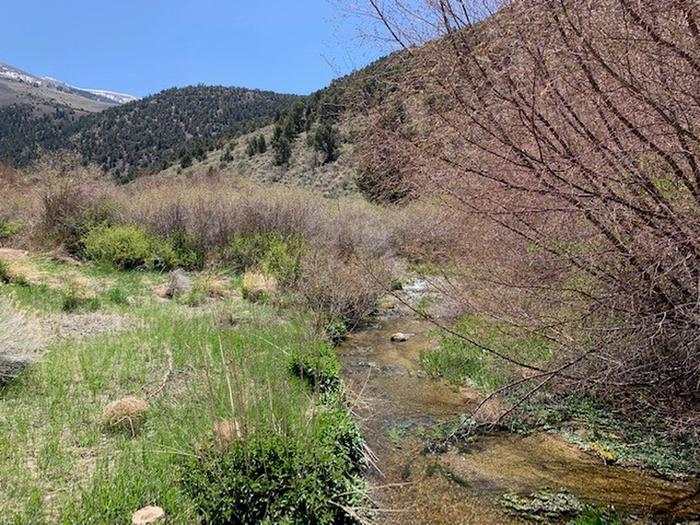 View of Bird Creek from Group Site AUpper Bird Creek