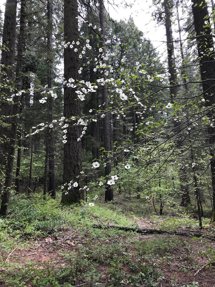dogwood trees in the area