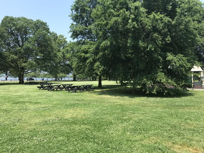 The photo shows picnic benches on a grassy area with scattered trees.Hains Point Picnic Area C