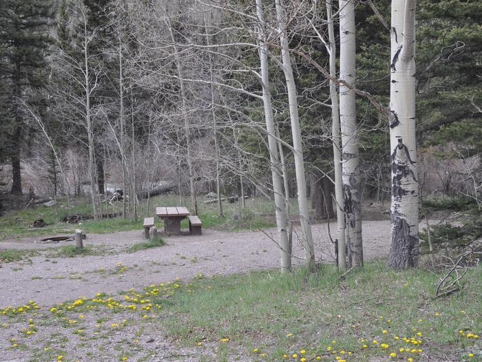 Lake Fork Campground Site 14