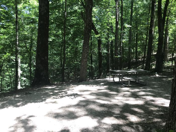 Good tent pad area with picnic table fire ring really nice views out over a ravine and huge trees