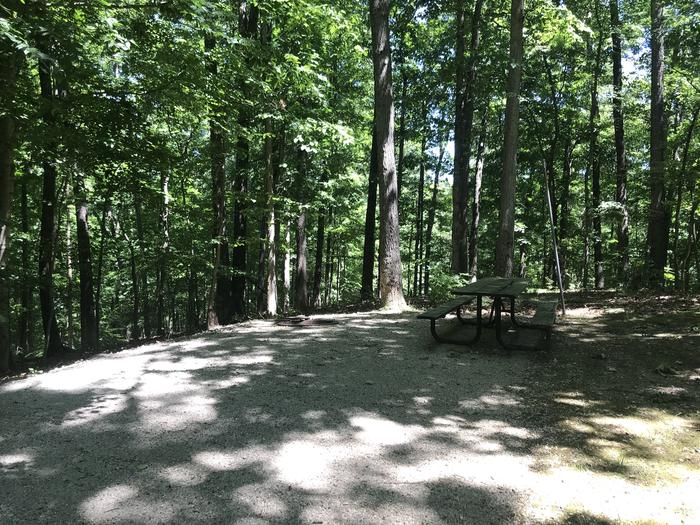 Wonderful woods views here with a good setting for your tent or just sitting around a campfire and enjoying nature