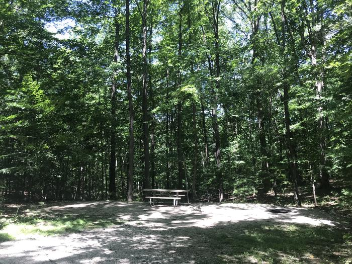 A gentle slope down to a nice large area for campfire watching roasting toasting and a tent site