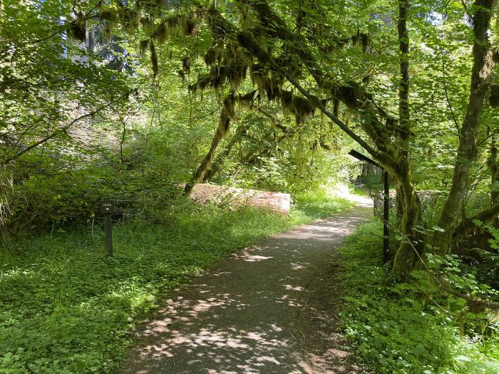 Trail from the RV park to loop A