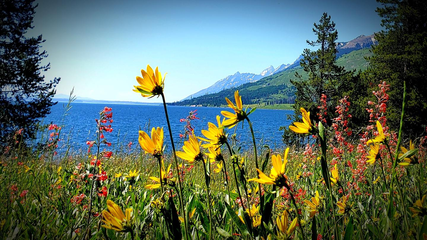 Mid summer View from the shores of Lizard Creek Campground