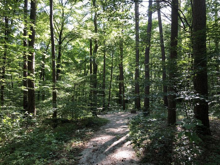Jackpine 12 walk in path
