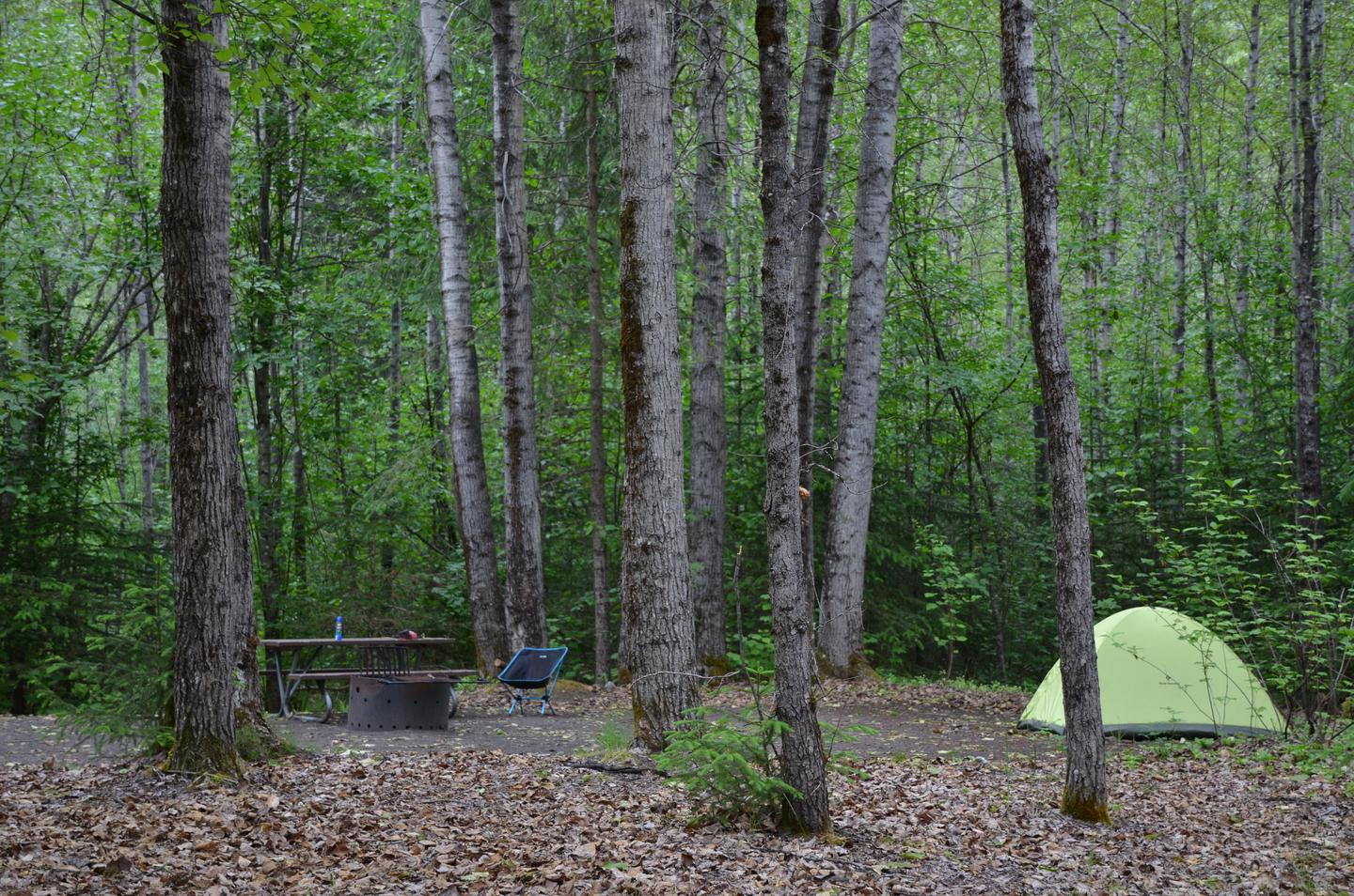 Campsite in the treesThe Dyea campground represents a restful place after the hustle and bustle of Skagway.