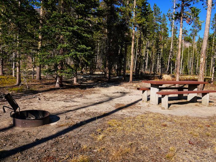 Campsite in tall pine trees.Cascade campsite