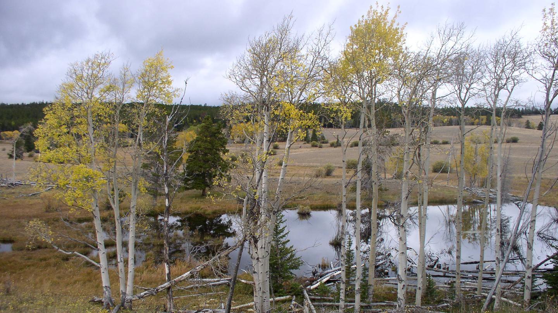 Aspen trees around pond.Doyle Creek