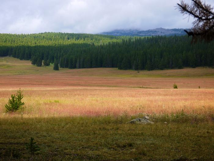 Open field next to Sitting Bull Campground