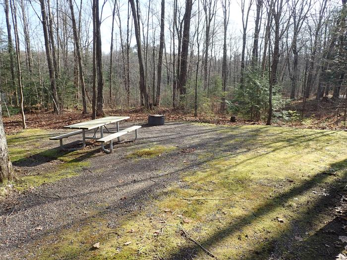 Site S25 picnic table and fire ringPicnic table and fire ring for Site S25