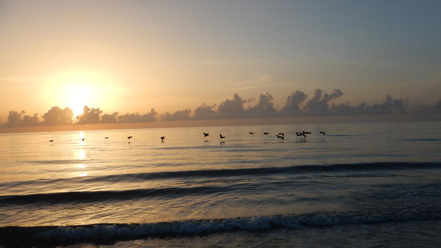Silhouette of birds flying over the Atlantic Ocean as the sun rises above the cloudy horizon.