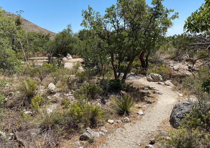 Graveled and rock lined pathway winding its way through desert vegetation leading the way to campsite number 19.Pathway to campsite number 19.