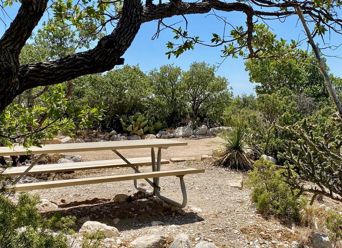 Campsite 19 with picnic table in the foreground, tent pad in the background.  Various types of desert vegetation surround the site and offer privacy and feeling of seclusion.Campsite 19 surrounded by desert vegetation offering a bit of privacy.