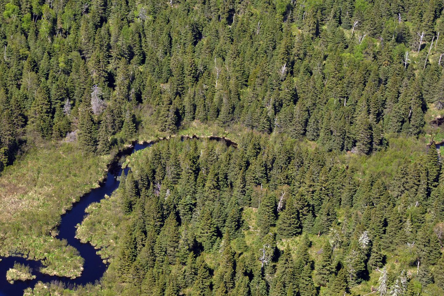 Washigton Creek  As Seen From the AirWashington Creek is a popular spot to look for moose.