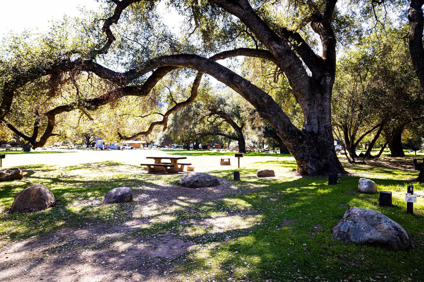 A photo of Site 013 of Loop AREA PARADISE at PARADISE CAMPGROUND with Picnic Table