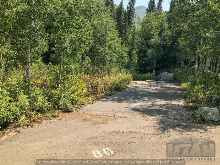 Spruces Site 86