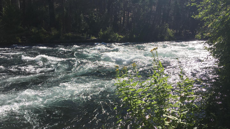Rapids on the Metolius RiverMonty is on the Metolius River