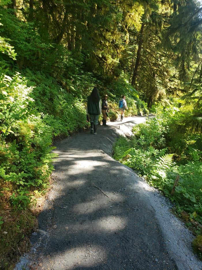 Three people walking on a gravel trail through the forest.Trail to Anan viewing platform