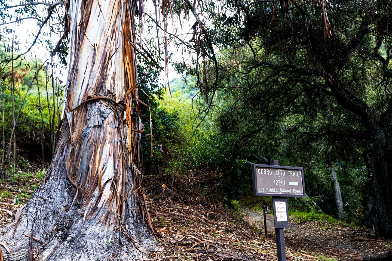 Cerro Alto Trail