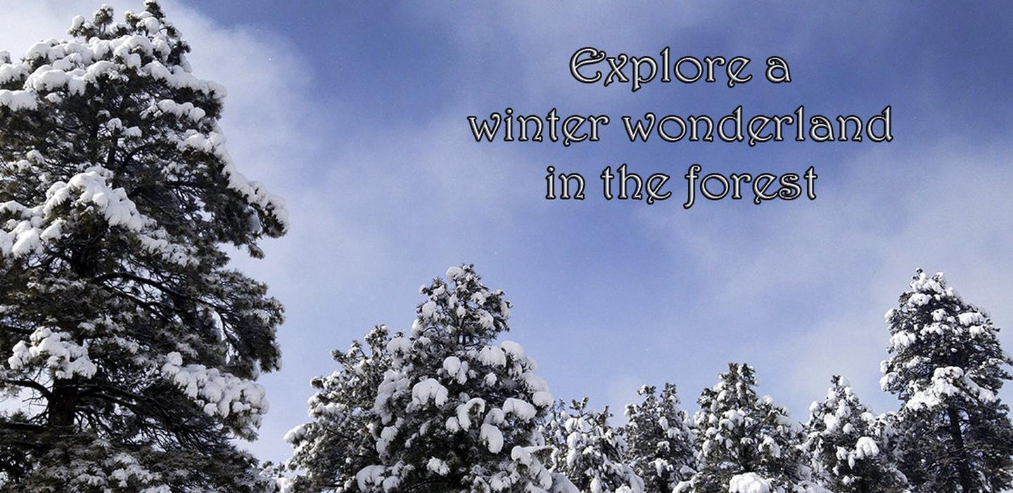 Snowy trees on the Kaibab National Forest