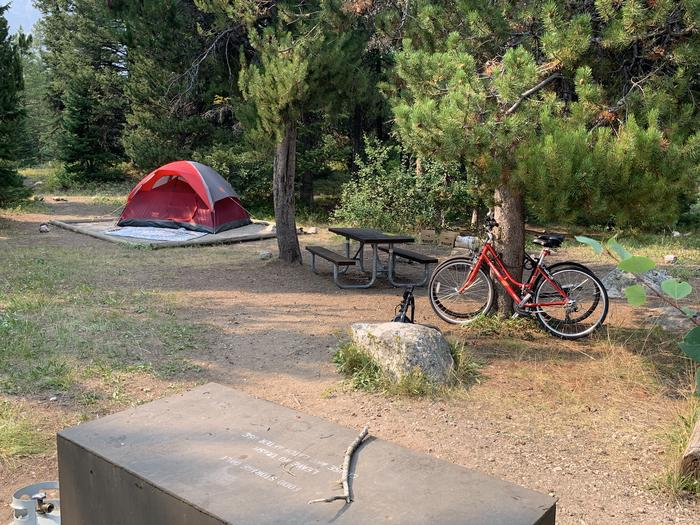 A photo of Site 40 of Loop Jenny Lake at Jenny Lake Campground with Picnic Table, Fire Pit, Food Storage, Tent Pad