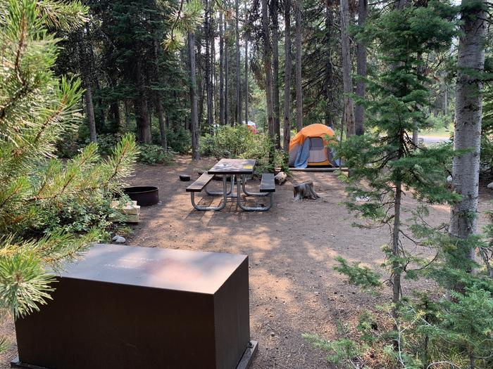 A photo of Site 14 of Loop Jenny Lake at Jenny Lake Campground with Fire Pit, Food Storage, Tent Pad