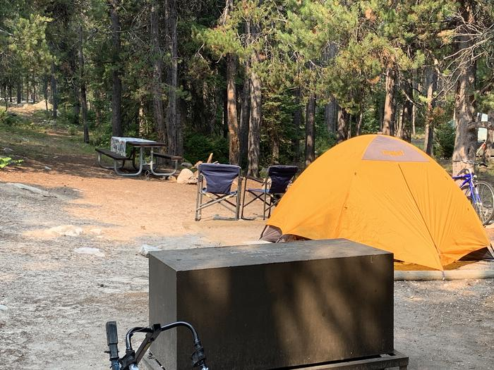 A photo of Site 24 of Loop Jenny Lake at Jenny Lake Campground with Picnic Table, Fire Pit, Food Storage, Tent Pad