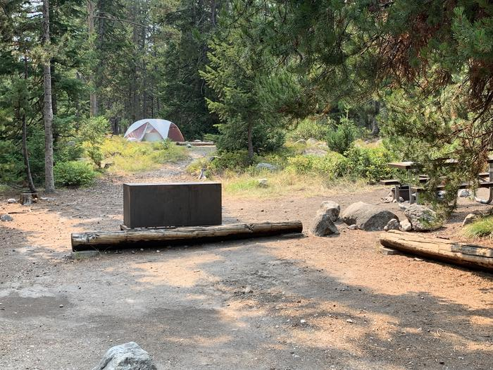A photo of Site 29 of Loop Jenny Lake at Jenny Lake Campground with Picnic Table, Fire Pit, Food Storage, Tent Pad