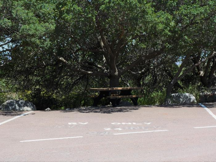 RV campsite 24 is a parking space with small trees and a picnic table to the rear of the site.RV Campsite 24 with trees and a picnic table along the back edge of the site.