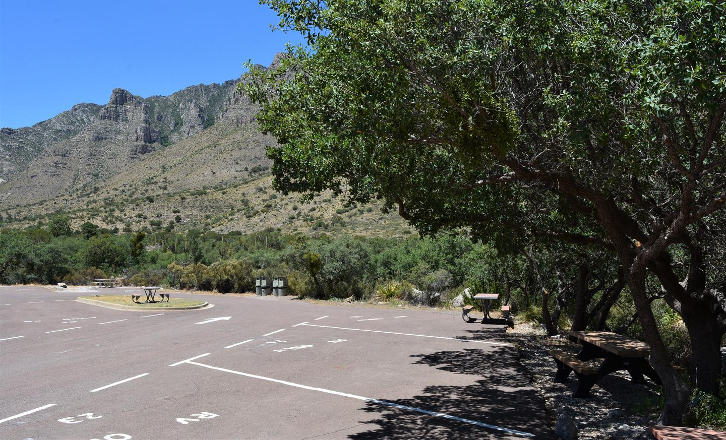 RV campsite 24 is shown from the south side of the site.  This view show the low hanging tree branches that will not accommodate vehicles over 8'.RV campsite 24 shown with low hanging tree branches.  Motorhomes/trailers or other vehicles that need more than 8' in height should not select this site.