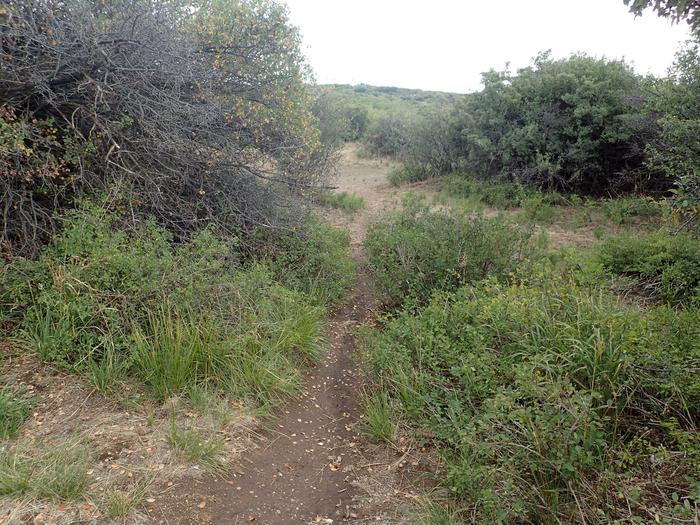 View of social trail leading to second tent location within Campsite A-012