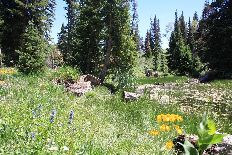 Lake Canyon   Campground -  Site  38Lake Canyon Campground -  Site  38