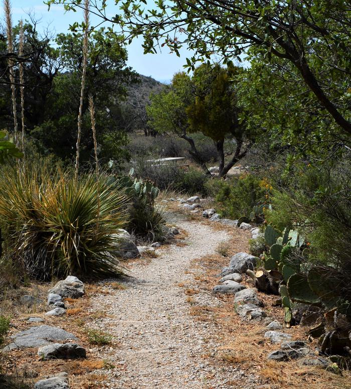 Pathway leading to campsite number one with desert vegetation lining each side.  Campsite is visible in the distance.