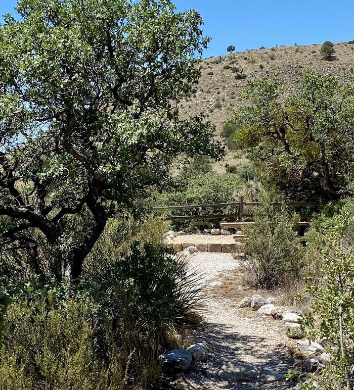 Walking trail leading to tent campsite number 13.  Trees and desert vegetation line the winding pathway.Walking trail leading to tent campsite number 13.