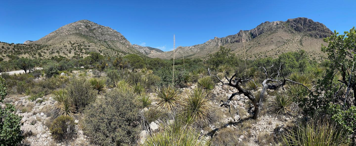 A view from Pine Springs Campground with the Chihuahuan Desert vegetation and the rugged Guadalupe Mountains to enjoy.