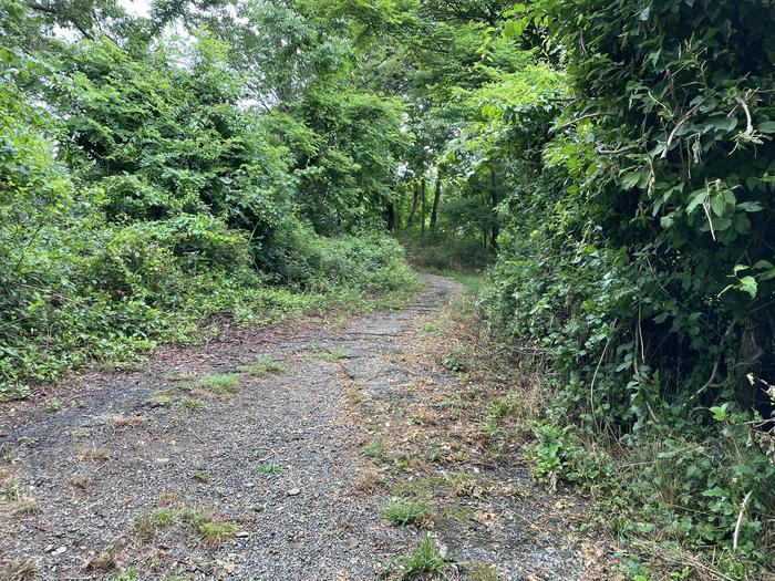 A photo of trail to Site 033 of Loop Lower Loop at Loft Mountain Campground