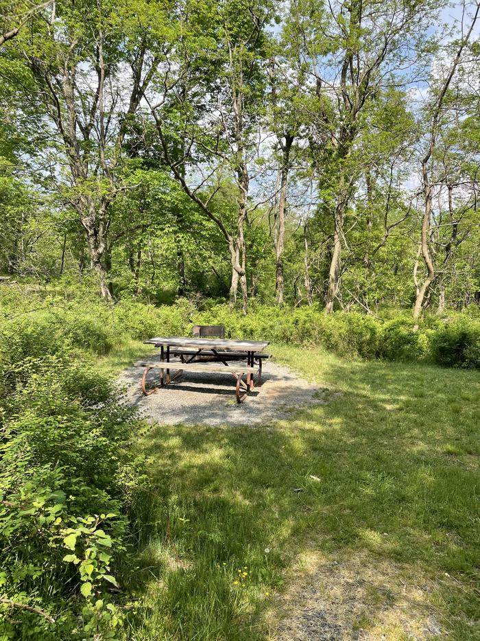 A photo of Site 039 of Loop Lower Loop at Loft Mountain Campground with Picnic Table, Fire Pit